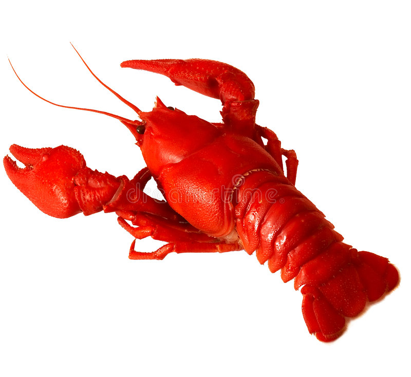 Crawfish. Red boiled crawfish object isolated royalty free stock image