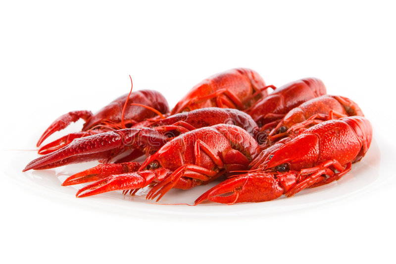 Crawfish. Red crawfish on a white dish royalty free stock image