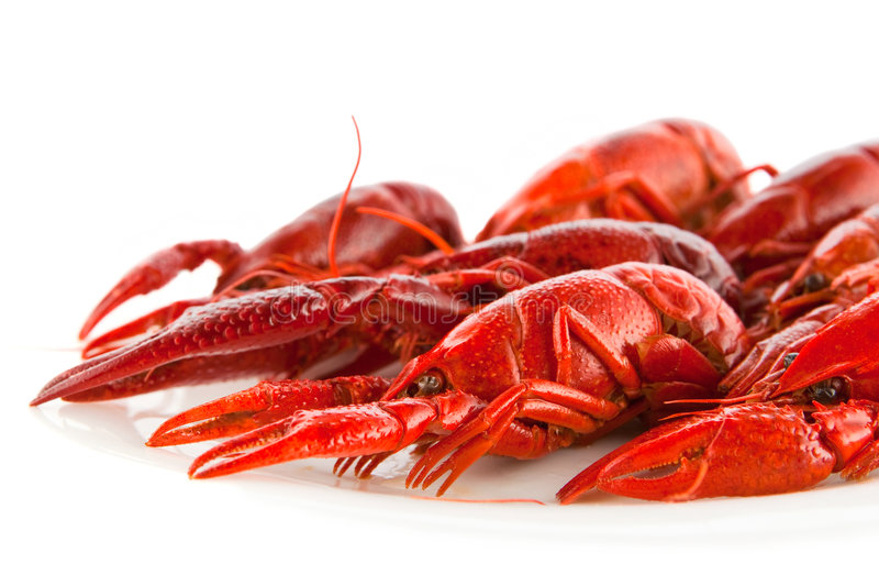 Crawfish. Red crawfish on a white dish royalty free stock images