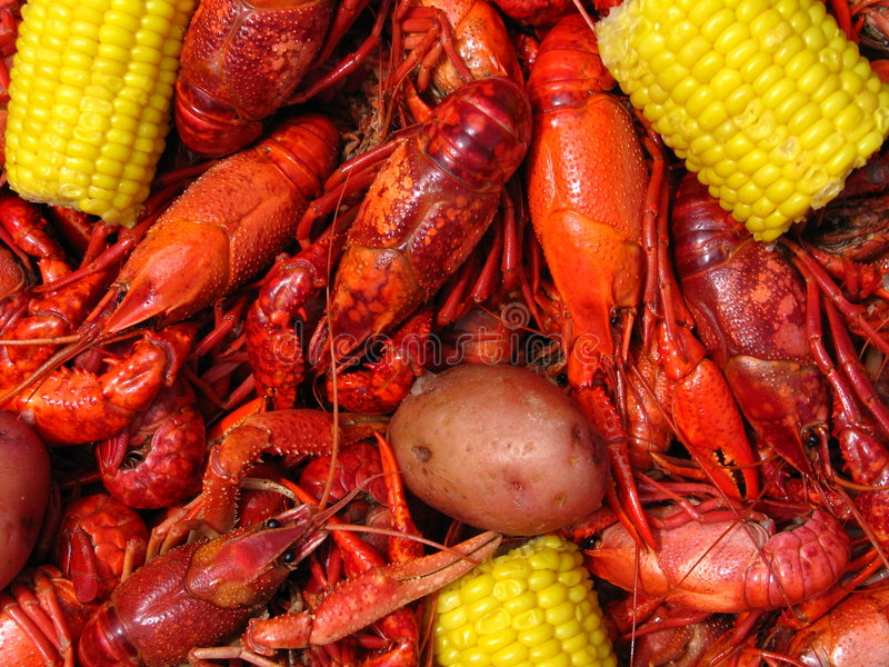 Crawfish Boil. Large boiled Louisiana crawfish (crayfish) with potatoes and ears of corn
