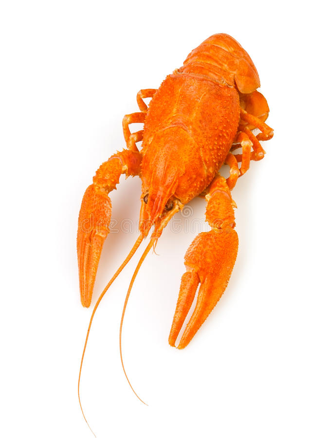 Download Crawfish boiled one stock photo. Image of carapace, river - 26796288