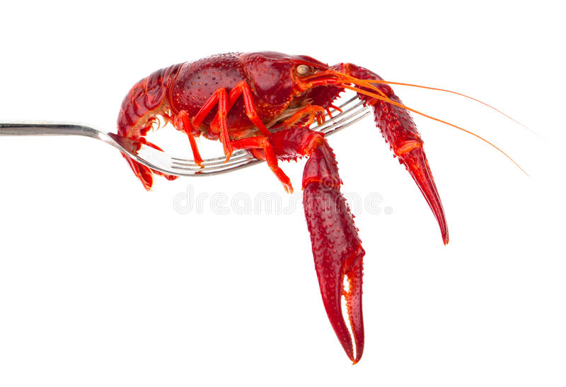 Crawfish. On fork isolated on white background stock photography