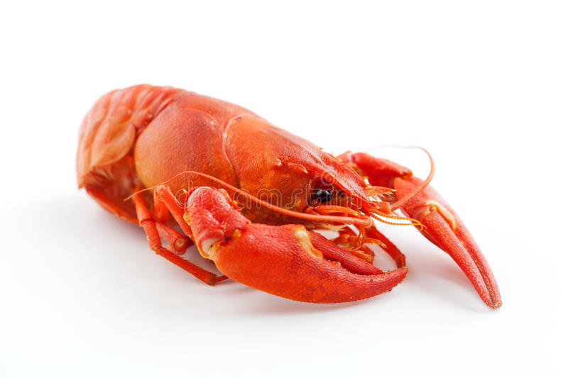 Crawfish. Fresh boiled crawfish on white isolated background stock photos