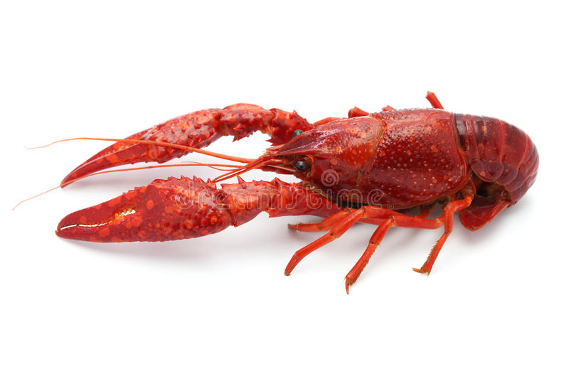 Crawfish. Isolated on white background stock photo