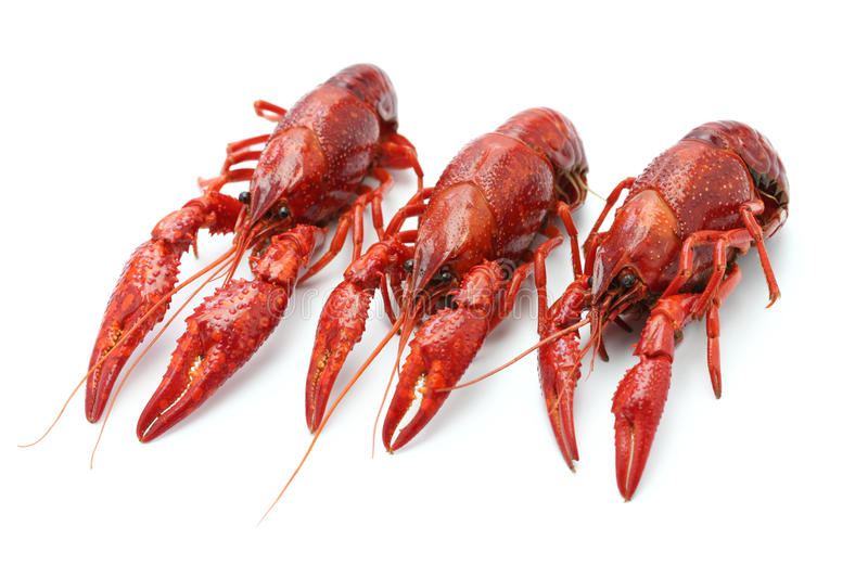 Crawfish. Isolated on white background royalty free stock photography