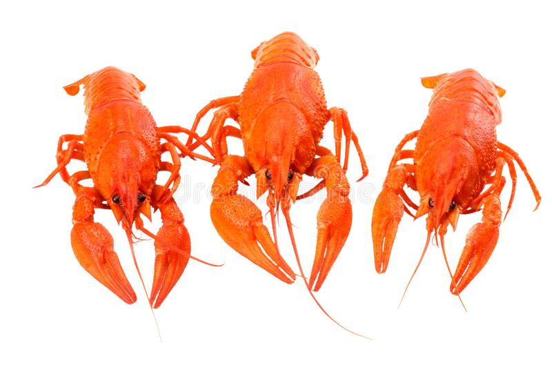 Crawfish isolated on white background. Beer brewery concept. Beer background stock photos