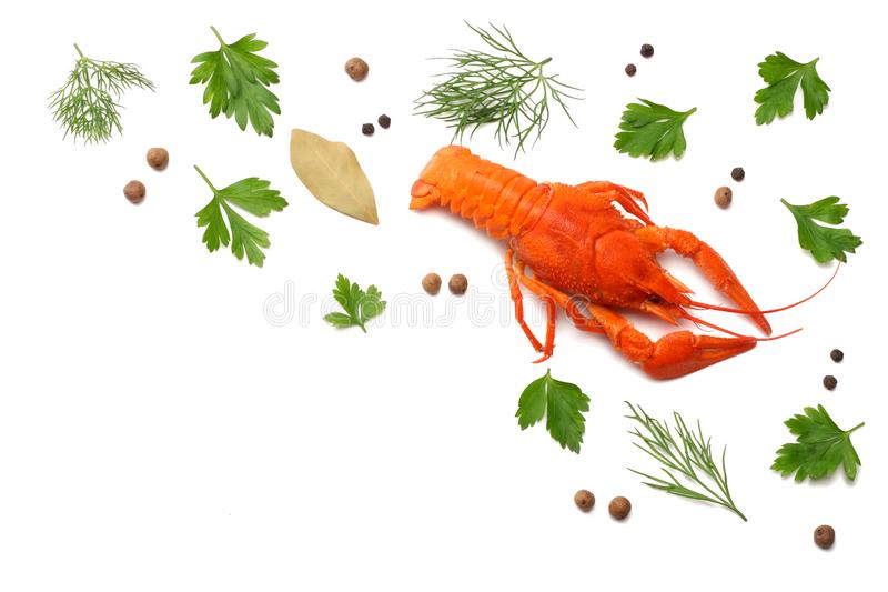 Crawfish isolated on white background. Beer brewery concept. Beer background royalty free stock photography