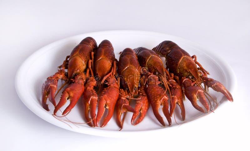 Crawfishes immagine stock