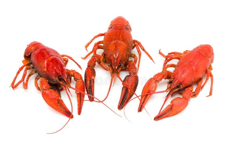 crawfishes 库存照片