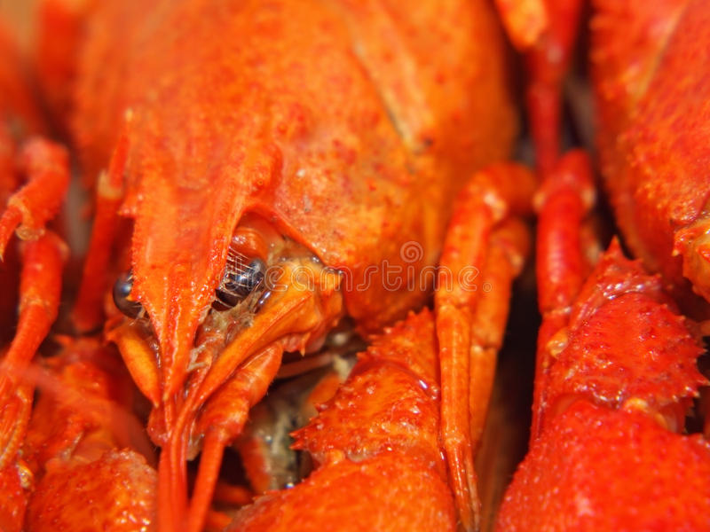 Download Crawfishes Fervidos Tomados O Close Up. Imagem de Stock - Imagem de carapace, crustacean: 26514493
