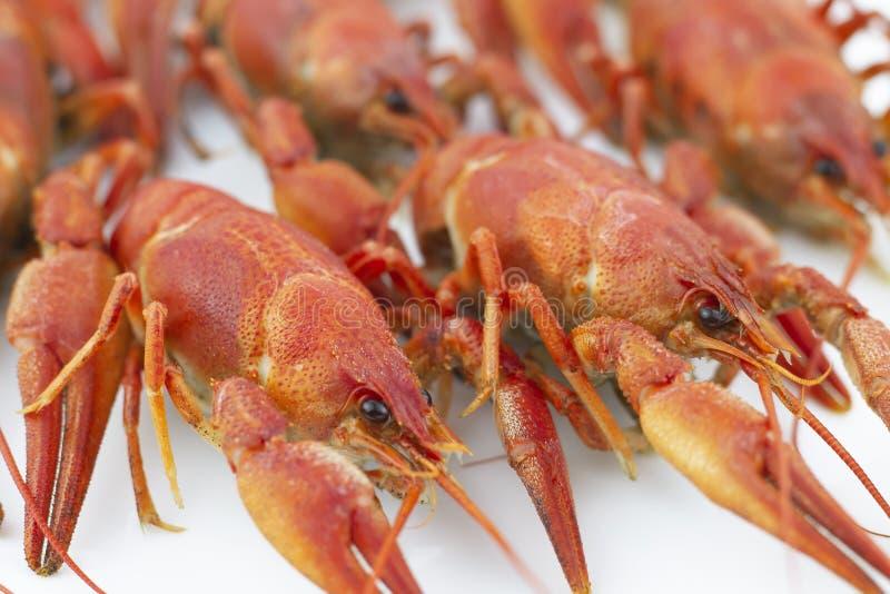 Crawfishes saporiti e bolliti di colore rosso su un fondo bianco closeup Fuoco selettivo immagini stock