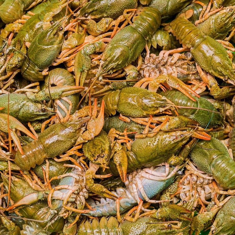 Crawfishes in tensione fotografia stock