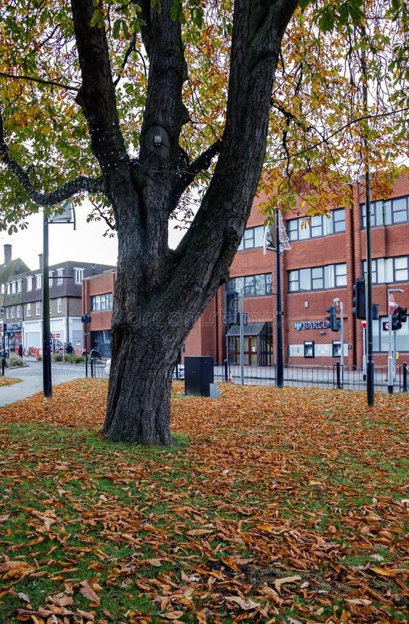 CRAWLEY, ZACHODNI SUSSEX/UK - LISTOPAD 21: Jesień liście pod Ho zdjęcie royalty free