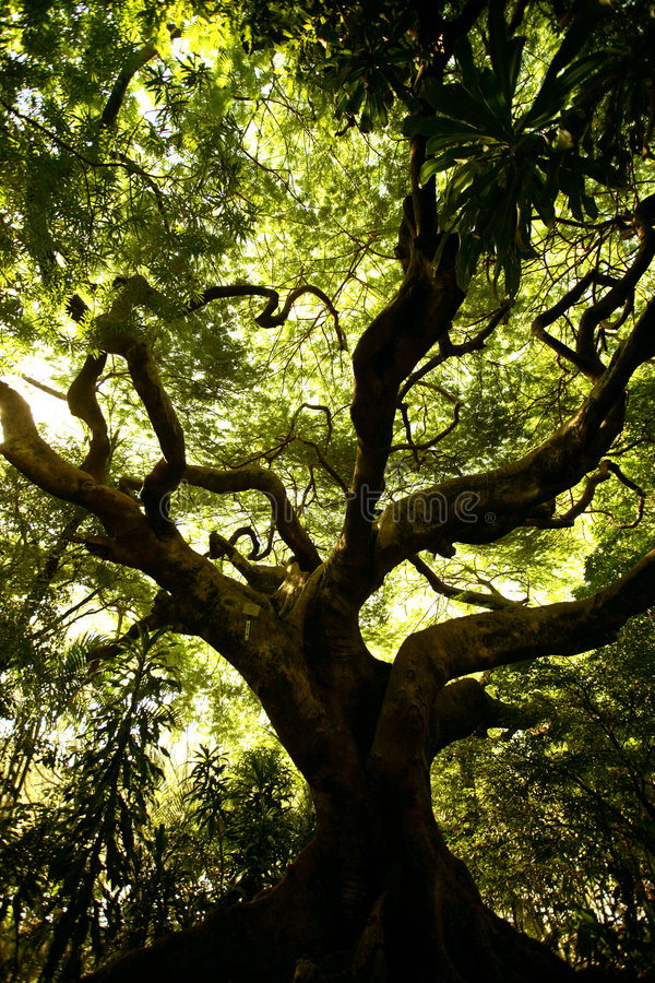 Crawling Tree royalty free stock images