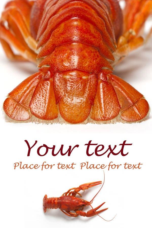 crayfish стоковое изображение rf