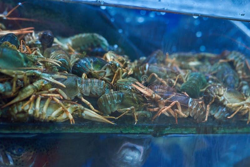 Crayfish in the aquarium store stock photos