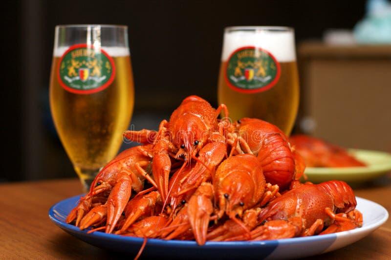 Crayfish & beer royalty free stock photos