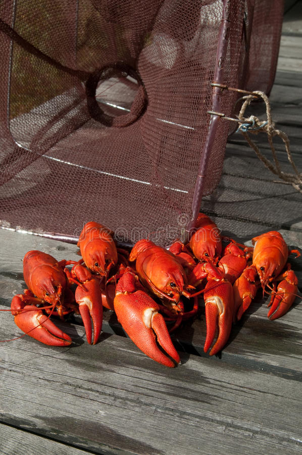 Crayfish Catch Royalty Free Stock Images
