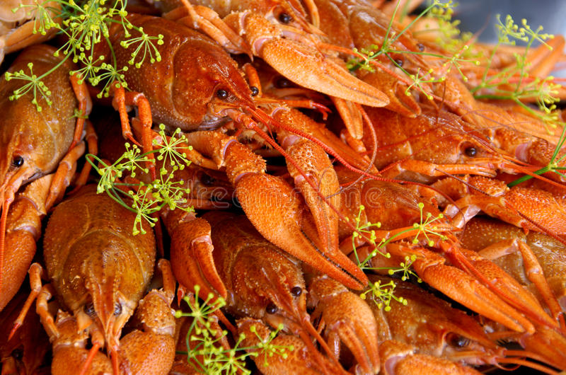 Crayfish cooked with dill. Is a Swedish tradition to eat in August