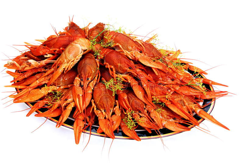 Crayfish cooked in dill arranged on a tray. It's a Swedish tradition to eat dill cooked crayfish in August stock photos