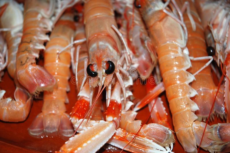Crayfish. The Norway lobster is fished both in the Medietrânio and in the Atlantic, being the ones of the ocean of greater size. The best time to buy Norway stock images