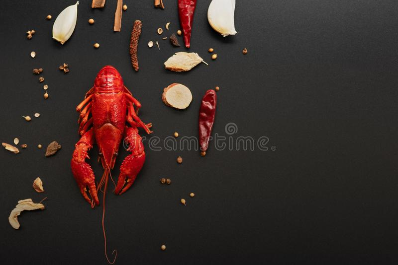 Crayfish red, Baby Lobster with herb for stir fry on black background stock images