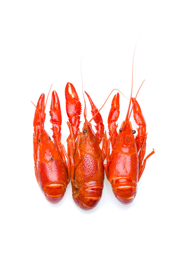 Download Crayfish trio stock photo. Image of whole, food, shellfish - 2709558