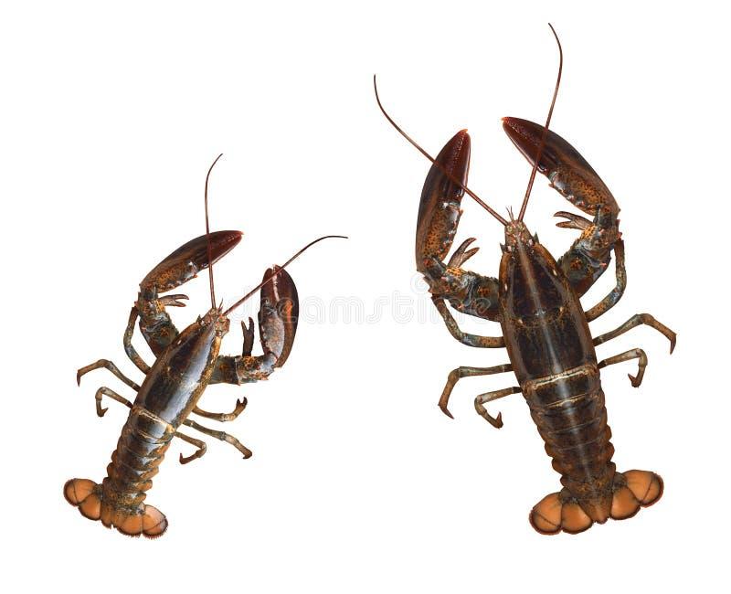 crayfishes стоковые фото