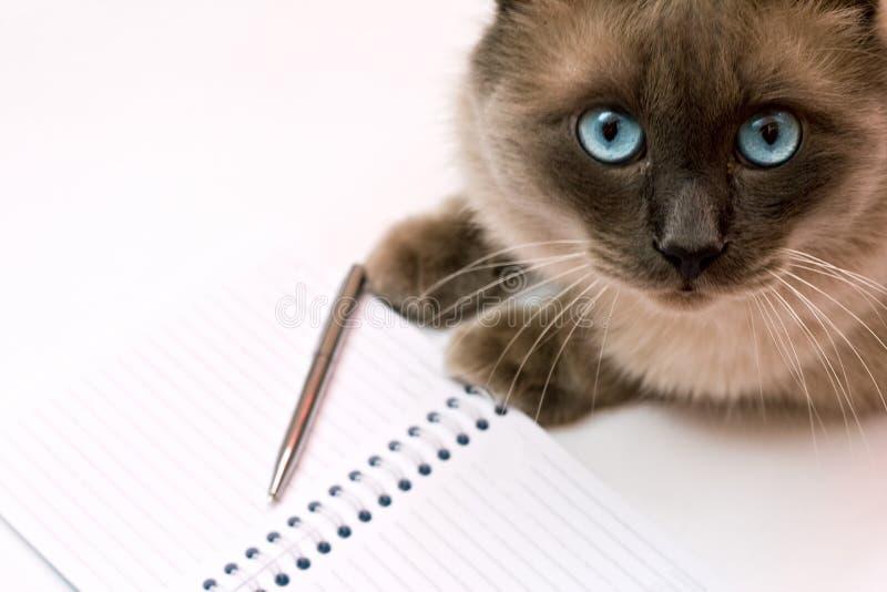 crayon lecteur drôle de bloc-notes d'affaires de concept blanc de chat photographie stock libre de droits