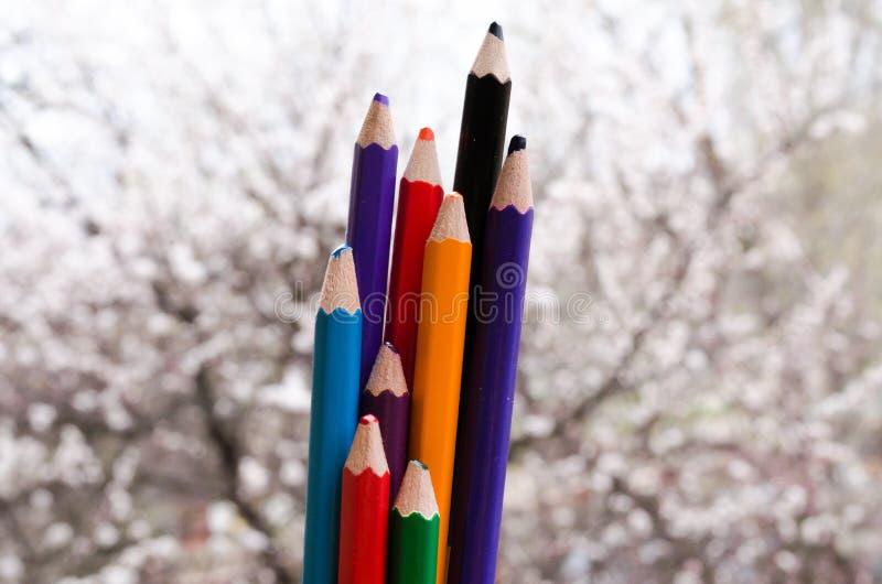 Crayons color?s avec les rayures peintes apr?s Couleurs de nature Crayons avec les abricots fleurissants sur le fond La nature cr photos stock