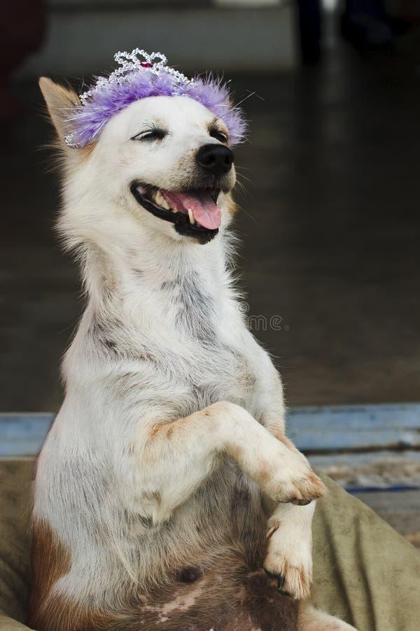Free Crazy Dog Stock Image - 35072831
