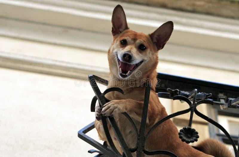 Crazy dog royalty free stock photo