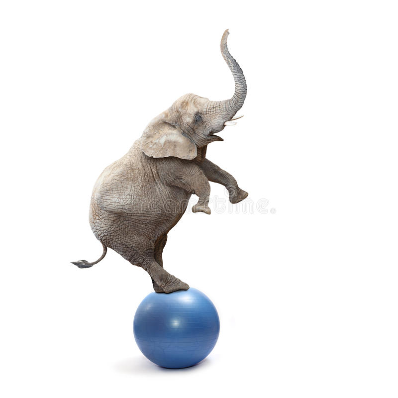 Free Crazy Elephant. Royalty Free Stock Photography - 40134747