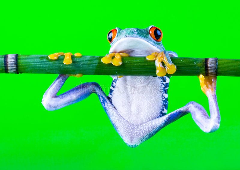 Crazy Frog Royalty Free Stock Photo