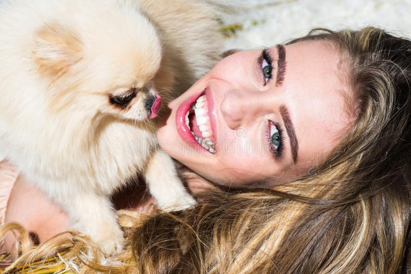 Crazy girl with little dog looking at the camera. Gashion Puppy. Cute dog with funny girl. Funny Puppy. Pomeranian puppy. Spitz stock images