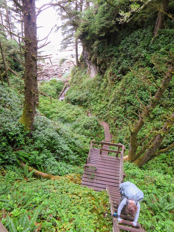 Crazy hike along the beautiful misty coasts and forest of Vancouver Island doing the rugged West Coast Trail. Many bridges and l. Adders and other fun obstacles stock photos