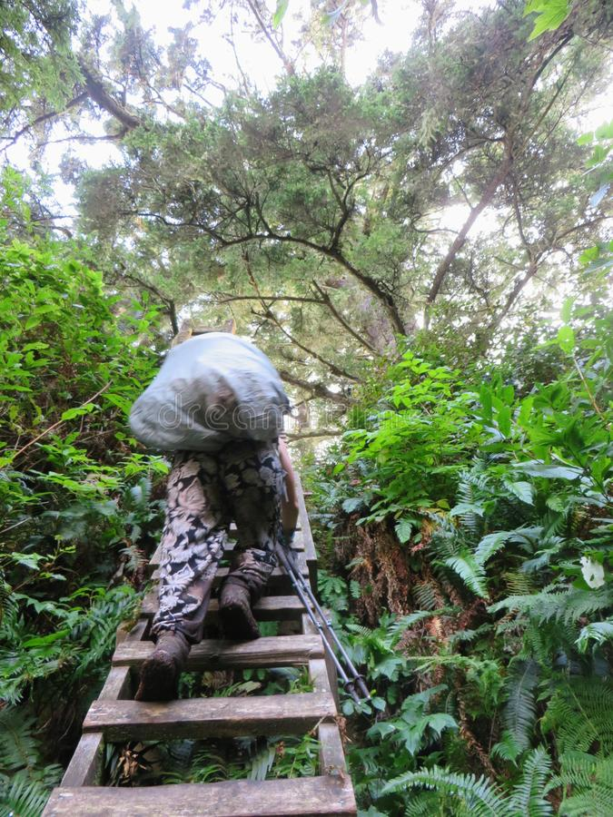 Crazy hike along the beautiful misty coasts and forest of Vancouver Island doing the rugged West Coast Trail. Many bridges and l. Adders and other fun obstacles stock images
