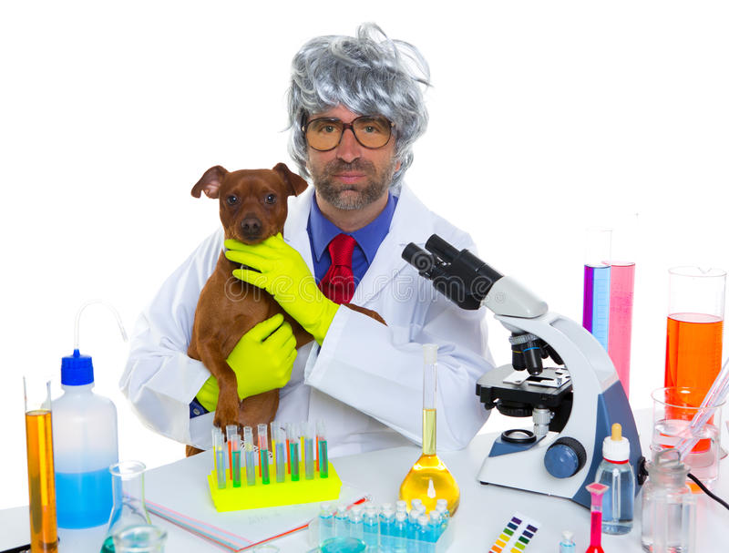 Crazy nerd scientist silly veterinary man with dog at lab stock image
