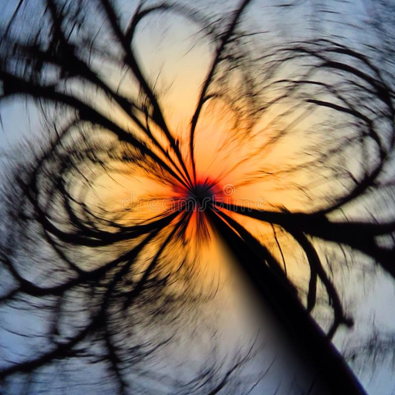 Crazy spin wheel tree royalty free stock photography