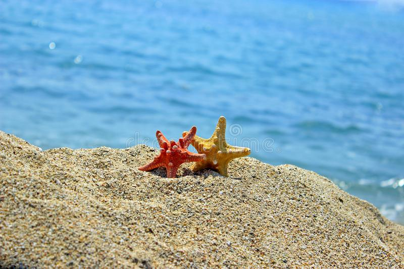 Creación del verano en la playa con las criaturas naturales del mar fotografía de archivo libre de regalías