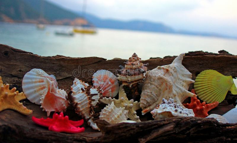 Creación del verano en la playa con las criaturas naturales del mar fotografía de archivo