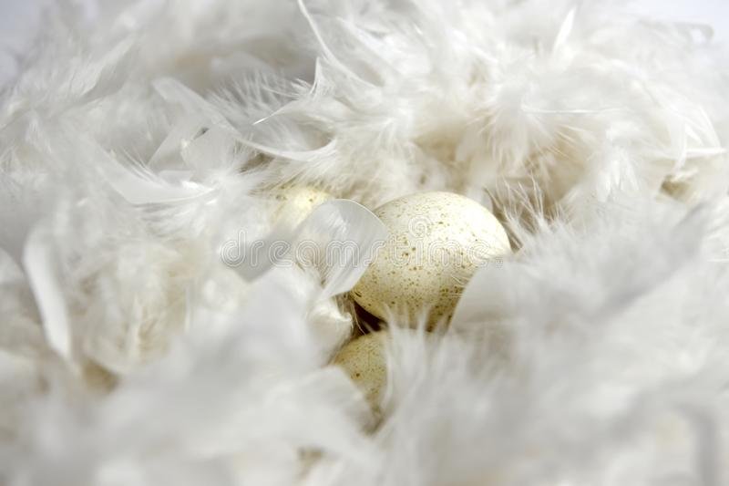 Cream-coloured eggs with speckles in a nest of white feathers. Several creamy coloured eggs with a lot of small speckles laying in a nest of white fluffy royalty free stock photos