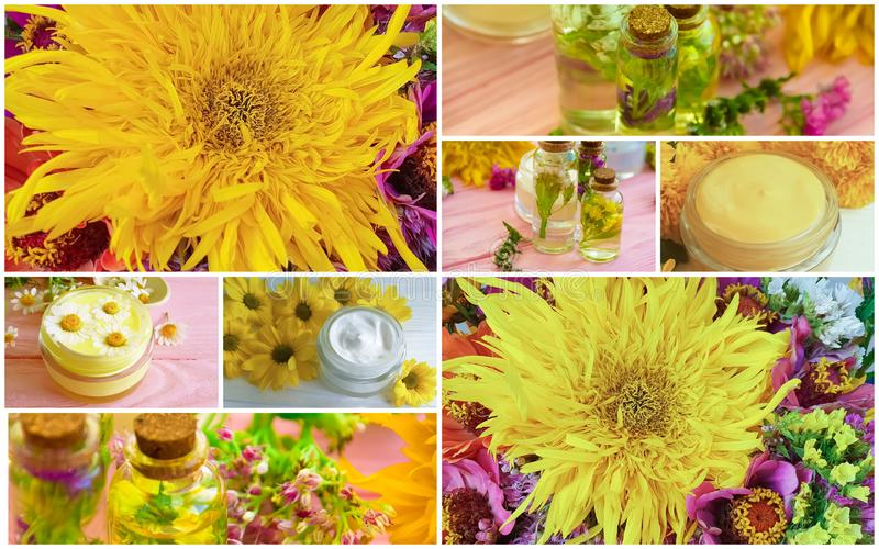 Cream cosmetic, wild flowers plant , bouquet of autumn flowers collage stock image