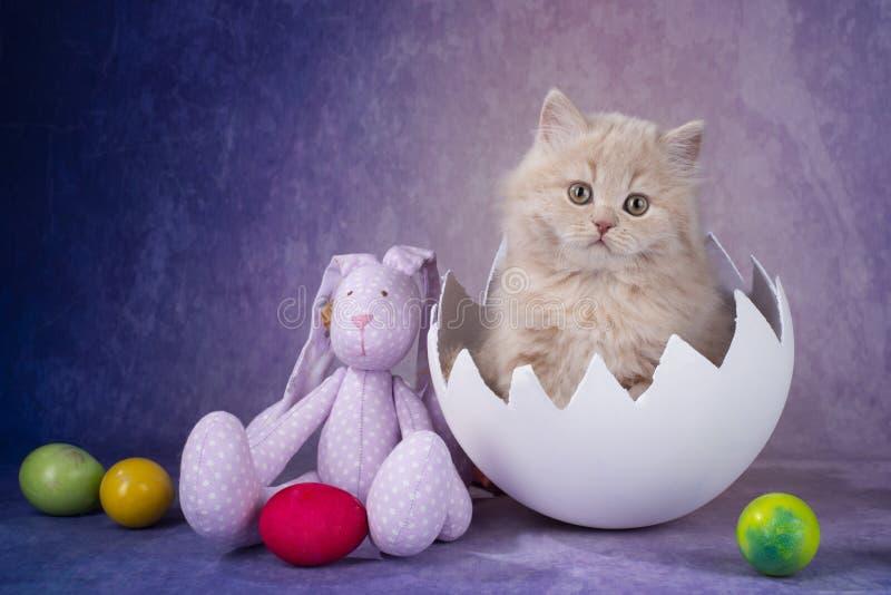 Cream kitten baby bird came into the world stock photos