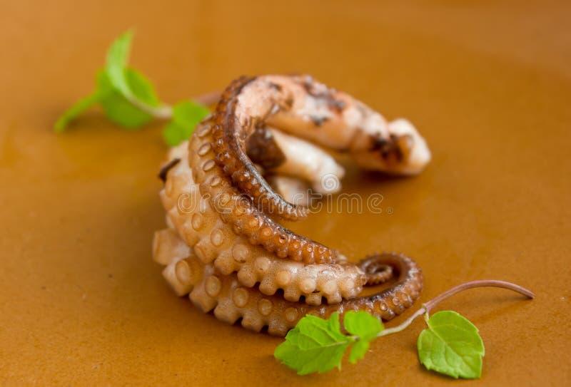 Cream Octopus Stock Image