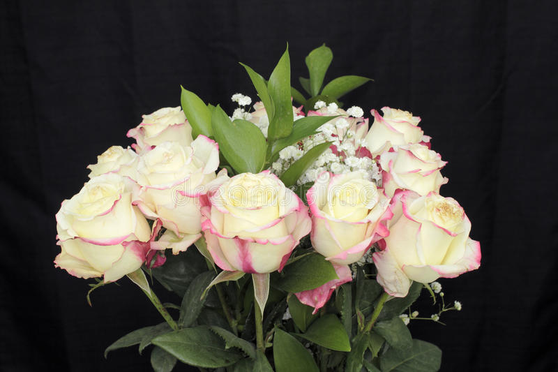 Download Creamy White Pink Roses Bouquet Stock Photo - Image of white, flora: 93881104