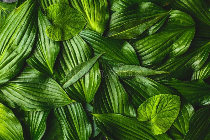 Creatieve achtergrond gemaakt tot groene bladeren royalty-vrije stock afbeeldingen