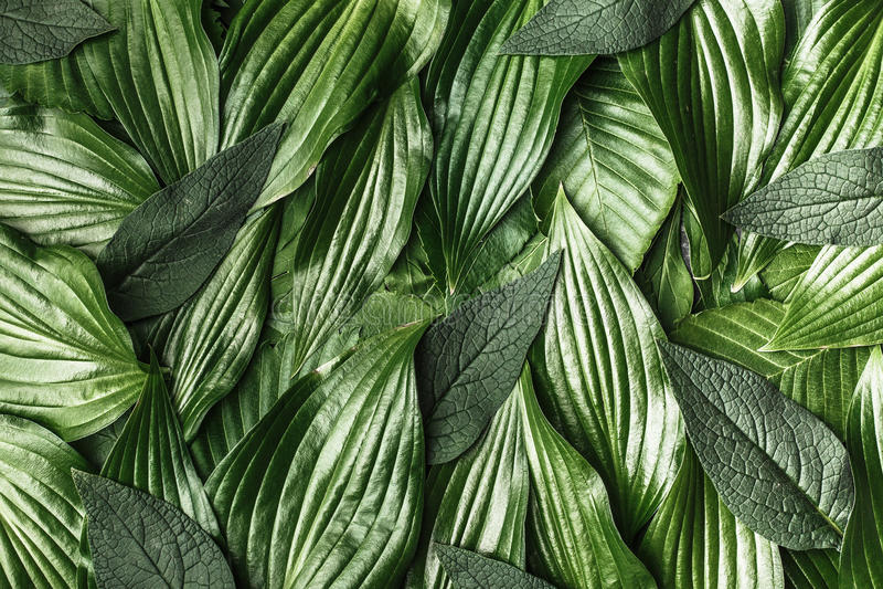 Creatieve achtergrond gemaakt tot groene bladeren stock fotografie
