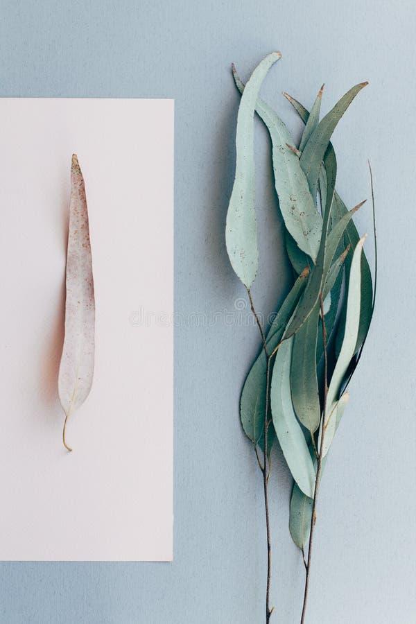 Creatieve affiche, prentbriefkaar, van een droge tak van eucalyptusboom op een grijze achtergrond en een eenzaam blad op een roze stock afbeelding