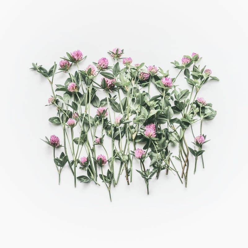 Creatieve bloemendielay-out van wilde bloemen op witte achtergrond wordt gemaakt Vlak leg, hoogste mening, exemplaarruimte royalty-vrije stock afbeelding
